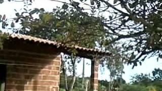 getlinkyoutube.com-COMO PEGAR UM PASSARO