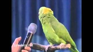 getlinkyoutube.com-Loro inteligente canta como una persona