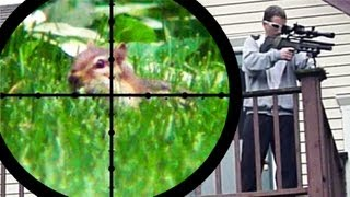 getlinkyoutube.com-Chipmunk Pest Control [Air Rifle Hunting] (June 25, 2011)
