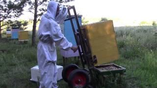 getlinkyoutube.com-Объединяю пчелосемьи