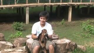 getlinkyoutube.com-Oyibo's Goat Farm Dairy Farm.mpg