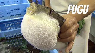 getlinkyoutube.com-Fugu-fish: risky Japanese delicacy. English version