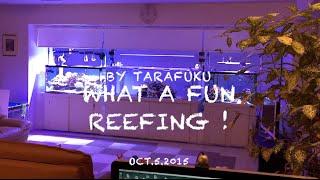 getlinkyoutube.com-Tarafuku Reef Aquarium Oct.5.2015
