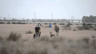 getlinkyoutube.com-Chasse au Maroc avec des lévriers.....