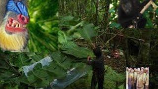 getlinkyoutube.com-Neej Neeg Hmong Real Story, (Green Spirit in Thailand)