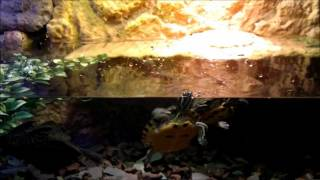 getlinkyoutube.com-BEST TURTLE TANK SETUP!! FACT!! A tank that's actually suited for turtles!!!
