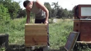 getlinkyoutube.com-późne zsypańce   pszczoły