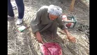 getlinkyoutube.com-شوي سمك المسكوف في اهوار العراق