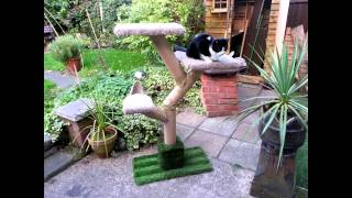 getlinkyoutube.com-DIY Cat Tree for not a lot of money!