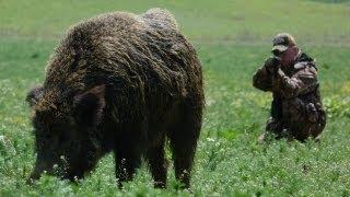 getlinkyoutube.com-Hunting Giant Wild Boar in Hungary