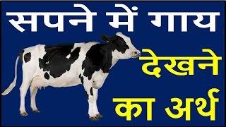 सपने में दिखे गाय तो बदलने वाला है आपका भाग्य Cow Dream Meaning Interpretation Swapna Phal