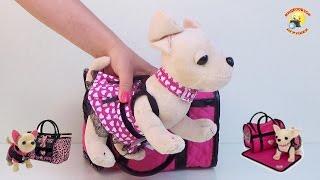 getlinkyoutube.com-Собачка Кикки (аналог Chi Chi LOVE), музыкальная, мягкая игрушка