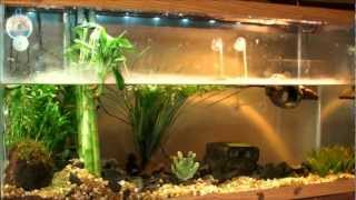 "Planted Turtle Tank ""Red Ear Slider"" (RES) with home made ""Co2 reactor"" Check it out!"