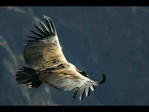 El Condor Pasa -sMU-YyavCyc