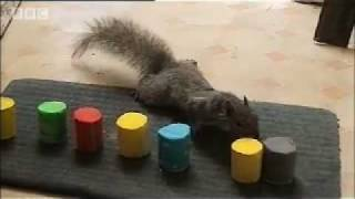 getlinkyoutube.com-How do Squirrels find food? - Clever Critters - BBC Pets & Animals