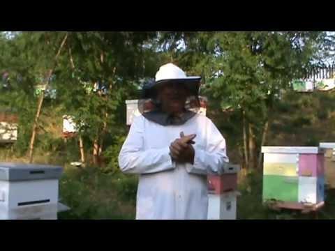 3/3 Inmultirea albinelor - Volumul 3 al Scolii de Apicultura va fi dedicat in mare acestui subiect
