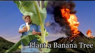 getlinkyoutube.com-*Plant Banana Trees* +Plant Now=Eat Bananas Next Fall 2016+