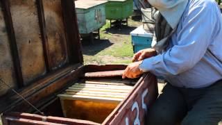 getlinkyoutube.com-Отбор меда из лежака