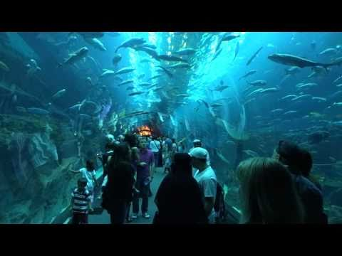 [dubai] Dubai Aquarium at Dubai Mall [1080/60p recording by DSC-HX9V]