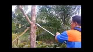 getlinkyoutube.com-เครื่องตัดหญ้า แทงปาล์ม ตัดปาล์ม ตัดแต่งกิ่งไม้ RO
