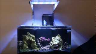 getlinkyoutube.com-Innovative Marine 16 Nano Nuvo month 3
