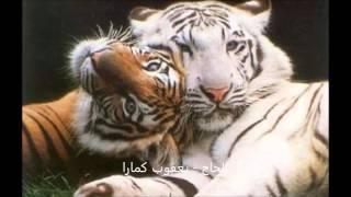 kole yacouba camara  7 الحاج - يعقوب كمارا - رحمه الله - من جمهورية مالي width=