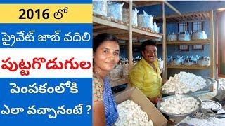 getlinkyoutube.com-Mushroom Cultivation in Telugu - Success Story by Thanusri Mushrooms