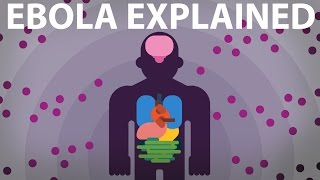 getlinkyoutube.com-The Ebola Virus Explained — How Your Body Fights For Survival