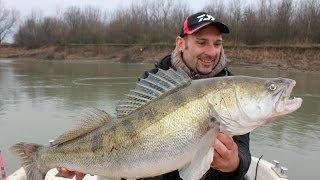 getlinkyoutube.com-BIG ZANDER 20 LBS IN VERTICAL FISHING by CATFISHING WORLD