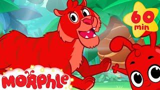getlinkyoutube.com-Tiger Adventures with Morphle ( +1 hour My Magic Pet Morphle Kids Animal Videos Compilation)