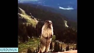 Video Lucu Super Konyol, Gokil, Kocak, Bikin Ngakak