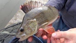 getlinkyoutube.com-Perch Fishing Rigs, Tips & Tactics