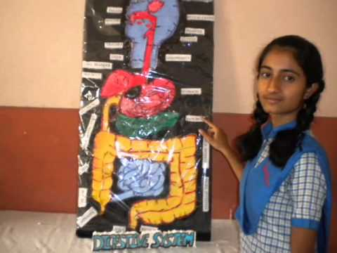 Science Exibhition @ Rajenddra's Academy