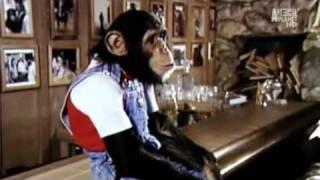 getlinkyoutube.com-Michael Jackson and Bubbles Animal Planet Documentary Part 3 of 5