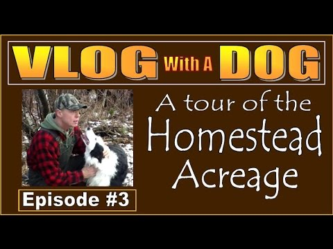 VLOG WITH A DOG. Episode 3.  THE HOMESTEAD ACREAGE with a Gift From Canada.