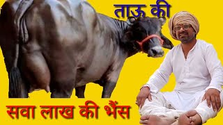 सवा लाख की भैंस   Murari ki kocktail   COMEDY TV  Rajasthani Haryanvi Comedy l Rajasthani Comedy DMD