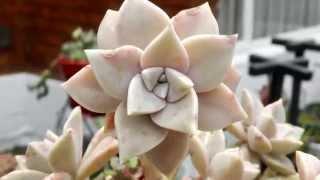 getlinkyoutube.com-Cómo Sembrar Cactus y Suculentas - TvAgro por Juan Gonzalo Angel