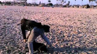 getlinkyoutube.com-GUY KICKS MY DOG! LONG BEACH CALIFORNIA