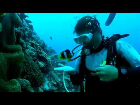 Big Blue Diving - Vanuatu - Tour Shop
