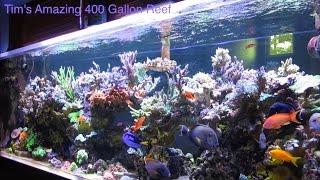 getlinkyoutube.com-Tim's Amazing Journey with his Beautiful 400 Gallon Reef - AmericanReef Reef Keeping Video