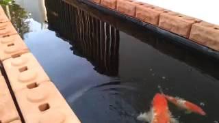 getlinkyoutube.com-บ่อปลาอิฐประสานหน้าบ้าน ง่ายๆ