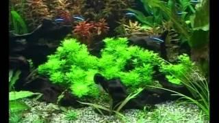 getlinkyoutube.com-Запуск и дизайн аквариума