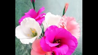getlinkyoutube.com-Paper flowers - Eustoma / Lisianthus (Flower # 57)