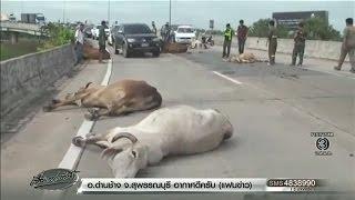getlinkyoutube.com-สิบล้อชนฝูงวัวบนสะพานตายคาที่ 3 ตัว สลด หนึ่งในนั้นมีวัวท้องแก่ใกล้คลอด