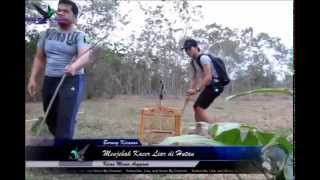 getlinkyoutube.com-Jebak Kacer Hutan - Menegangkan (Bird Trap)
