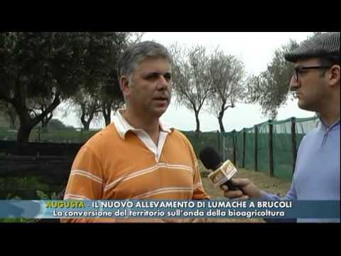 AUGUSTA - IL NUOVO ALLEVAMENTO DI LUMACHE A BRUCOLI