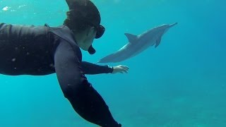 getlinkyoutube.com-GoPro: Swimming With Dolphins