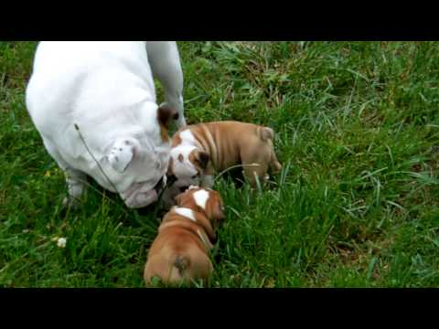 Zula 2013 Litter Playing Outside at 6 wks ( Part 1 of 2)