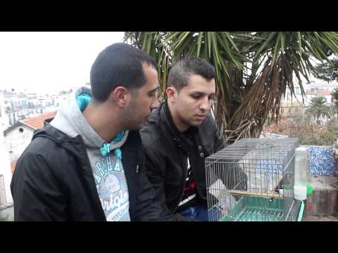DZjoker : Bref Algerien ,Journée Normal في الجزائر فقط