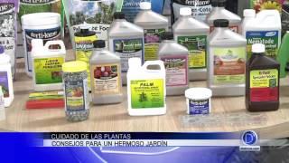 Osmani Navarro consejos para el cuidado de las plantas